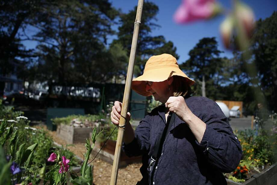 Darlene Polanka of San Francisco, works to secure a plant to stakes in her garden box at the Haight Ashbury Neighborhood Council recycling center/Kezar Gardens on Tuesday, July 2, 2012 in San Francisco, Calif. Photo: Lea Suzuki, The Chronicle