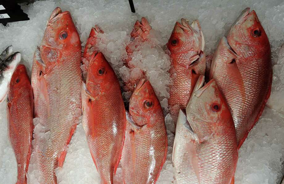 Red Snapper Photo: HCHRON, Freelance / © 2011 Dave Rossman