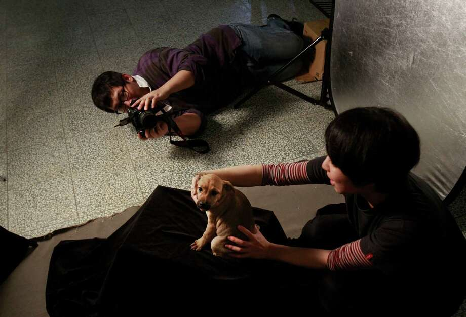In a makeshift studio, Taiwanese photographer Tou Chih-kang tries to make a portrait of a puppy in the final moments of its life before it's put down by lethal injection at a shelter in Taoyuan, northern Taiwan. Photo: Wally Santana / AP