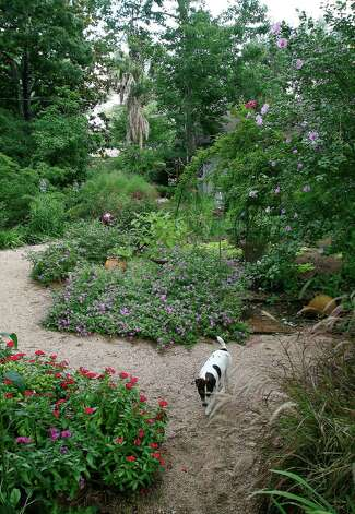 Trailing lavender lantana skirts a garden path. Photo: John Everett / John Everett