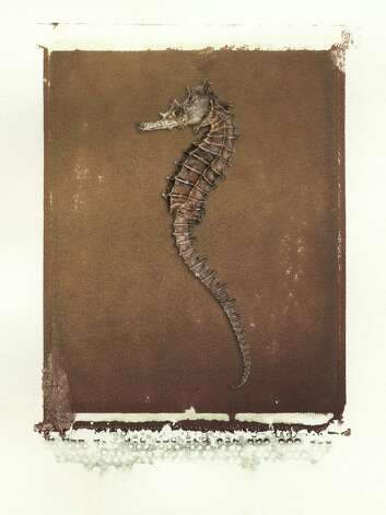 "Jay Miscencik's ""SeaHorse"" Polaroid transfer will be included in a maritime show that opens July 19 at City Lights Gallery in downtown Bridgeport. Photo: Contributed Photo"