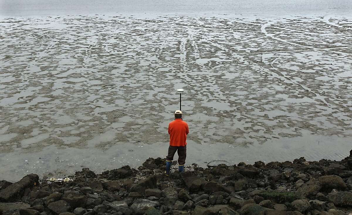 Matt Ferner, from the San Francisco Bay National Estuarine Research Reserve, uses a GPS to record the precise location of Olympia oysters along the Berkeley Marina shoreline in Berkeley, Calif. on Friday, July 6, 2012. A study by the Nature Conservancy concludes that the California oyster reefs are declining.