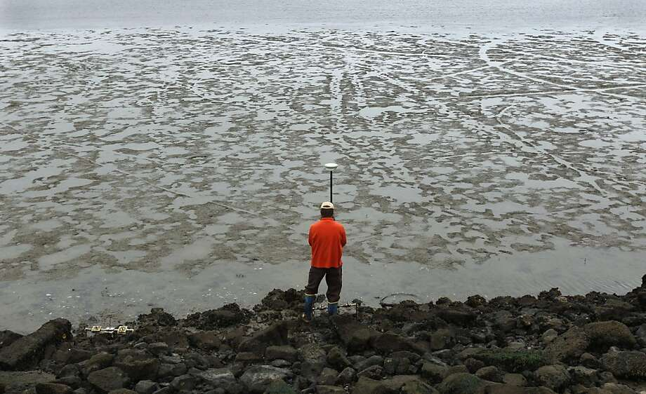 Matt Ferner, from the San Francisco Bay National Estuarine Research Reserve, uses a GPS to record the precise location of Olympia oysters along the Berkeley Marina shoreline in Berkeley, Calif. on Friday, July 6, 2012. A study by the Nature Conservancy concludes that the California oyster reefs are declining. Photo: Paul Chinn, The Chronicle