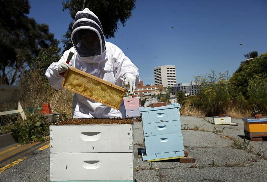 Karen Peteros works with the bee hives at Hayes Valley community garden in San Francisco, Calif. Photo: Sarah Rice, Special To The Chronicle