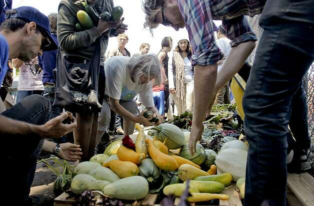 Members of Occupy the Farm in Berkeley, gather the vegetables after returning to the Gill Agricultural Tract, on Saturday July 7, 2012, in Berkeley, Calif. The vegetables that they planted months before were collected to now distribute them to members of the local community. The plot of agricultural land on San Pablo Ave. is operated by UC Berkeley. Photo: Michael Macor, The Chronicle