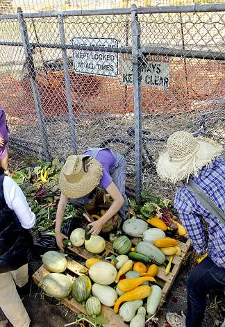 Members of Occupy the Farm in Berkeley, gather the vegetables after returning to the Gill Agricultural Tract, on Saturday July 7, 2012, in Berkeley, Calif., to harvest the vegetables that they planted months before, to now distribute them to members of the local community. The plot of agricultural land on San Pablo Ave. is operated by UC Berkeley. Photo: Michael Macor, The Chronicle