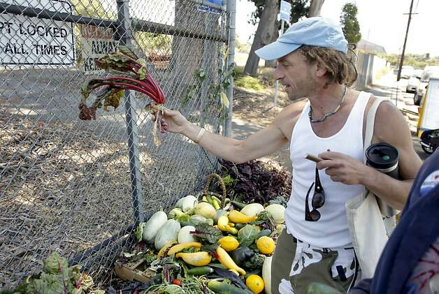 David Kupfer, joined members of Occupy the Farm in Berkeley, as they returned to the Gill Agricultural Tract, on Saturday July 7, 2012, in Berkeley, Calif., to gather the vegetables that they planted months before to now distribute them to members of the local community. The plot of agricultural land on San Pablo Ave. is operated by UC Berkeley. Photo: Michael Macor, The Chronicle