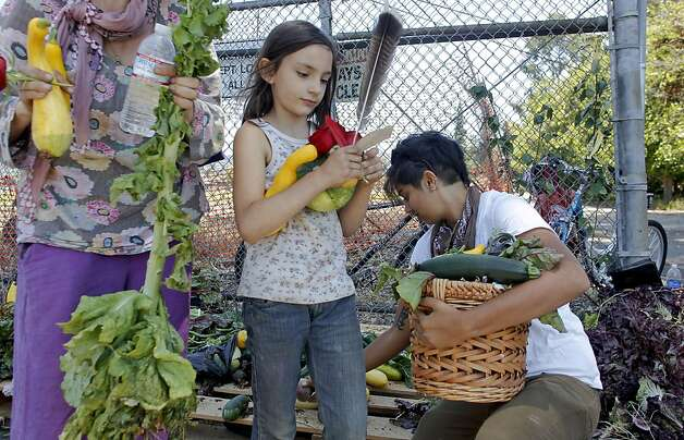 Rosyyie Rosenberj, (center0 and Marika Iyer, gather vegetables, after joining members of Occupy the Farm in Berkeley, as they returned to the Gill Agricultural Tract, on Saturday July 7, 2012, in Berkeley, Calif., to retrieve the vegetables that they planted months before to now distribute them to members of the local community. The plot of agricultural land on San Pablo Ave. is operated by UC Berkeley. Photo: Michael Macor, The Chronicle