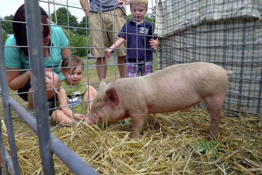 Honey a baby pig on display at the Tin Horn Farm booth gets a lot of attention during the Delmar Farmers Market in Delmar N.Y. Saturday July 7, 2012. (Michael P. Farrell/Times Union) Photo: Michael P. Farrell