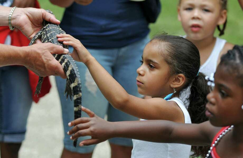 Sanai Valentin of Albany, 5, center, pets Vern, a 2 year old North American alligator who was rescued from a parking lot in Yonkers, during G.E. Kids Day at the Plaza, on Sunday July 8, 2012 in Albany, NY.  (Philip Kamrass / Times Union) Photo: Philip Kamrass / 00018329A