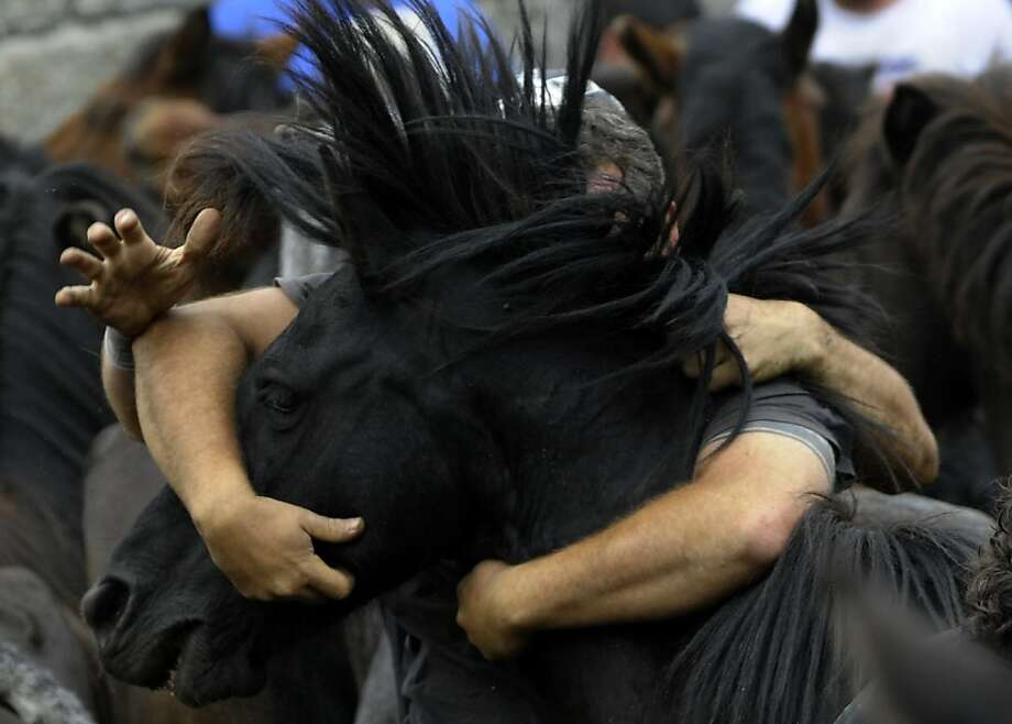 """Aloitadores"" (fighters) struggle with a wild horse during the 400-year-old horse festival called ""Rapa das bestas"" (Shearing of the Beasts) in Sabucedo, some 40 kms from Santiago de Compostela, on July 9, 2012. TOPSHOTS/AFP PHOTO / MIGUEL RIOPAMIGUEL RIOPA/AFP/GettyImages Photo: Miguel Riopa, AFP/Getty Images"