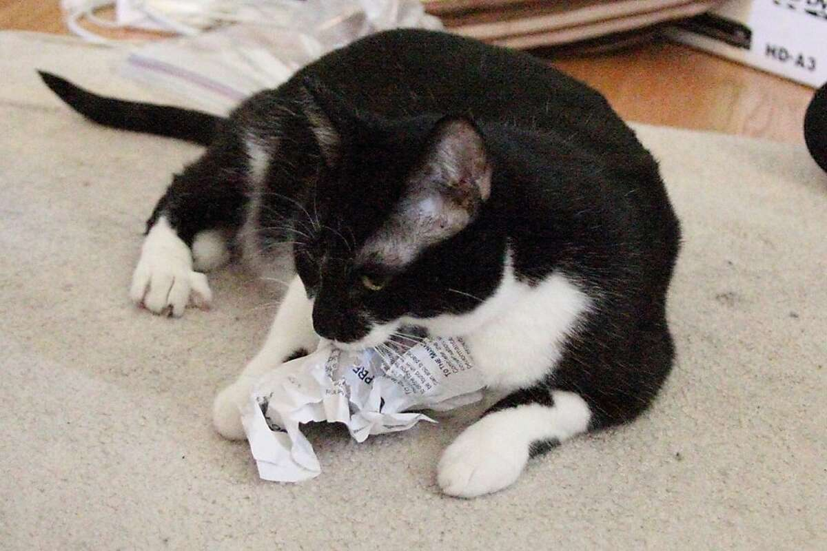 Veronica eating Alice's termination papers.