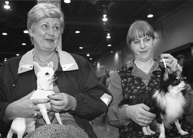 Shirlee Murray holds Stonehill Thunderroll, her Chihuahua, while Kyle Potts holds Davishall Guadalajara, her long-coat Chihuahua at the River City Cluster of Dog Shows on Aug. 21, 1998 at the Convention Center. Photo: San Antonio Express-News File Photo