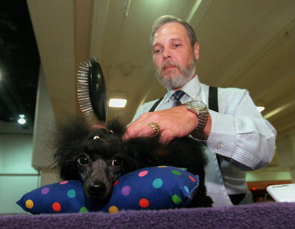 Professional dog handler Richard Mixon grooms a Toy Poodle in preparation for the River City Cluster of Dog Shows on Aug. 19, 1998 at the Convention Center. Photo: Kin Man Hui, San Antonio Express-News