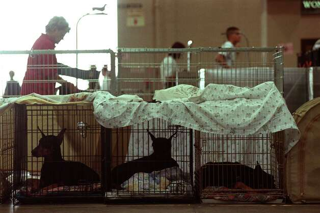 A row of Doberman Pinschers sit in cages in preparation for the River City Cluster of Dog Shows on July 12, 2001 at the Convention Center. Photo: San Antonio Express-News File Photo / EN