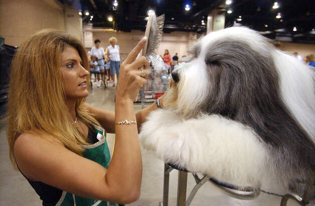 Jeannie Mills of Kansas applies a final touch to her Bearded Collie Aaron at the River City Cluster of Dog Shows on July 10, 2003 at the Convention Center. Photo: Kin Man Hui, San Antonio Express-News / SAN ANTONIO EXPRESS-NEWS