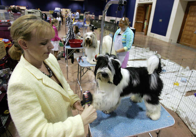 Lois DeMers (left) brushes Missy the Tibetan Terrier prior to competition at the River City Cluster of Dog Shows on July 26, 2006 at the Convention Center. Photo: Kin Man Hui, San Antonio Express-News / © San Antonio Express-News
