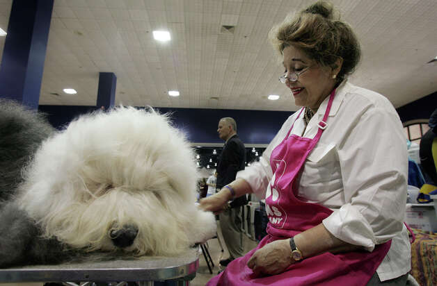 Browning the Old English Sheepdog gets brushed by owner Lannie Williams at the River City Cluster of Dog Shows on July 26, 2006 at the Convention Center. The Houston resident has been showing her dogs for seven years. Photo: Kin Man Hui, San Antonio Express-News / © San Antonio Express-News