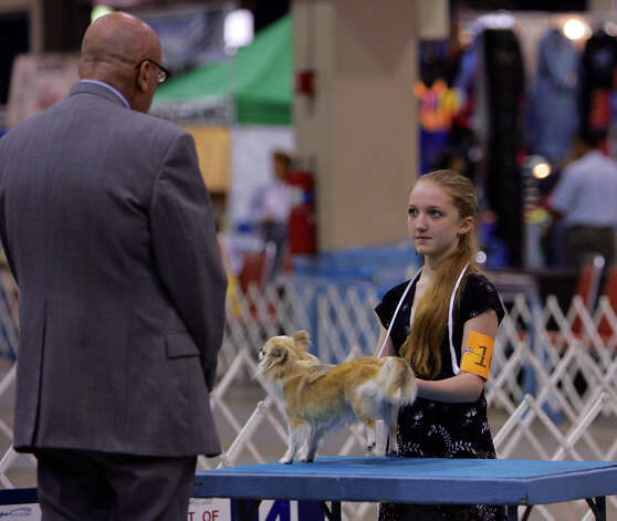 Show judge Michael J. Dachel looks at Jewelry, a long-haired Chihuahua from Japan, during the young puppy competition at the River City Cluster of Dog Shows on July 13, 2007 at the Convention Center. Kirsten Potts, 12, has been handling dogs for six years. Photo: San Antonio Express-News File Photo
