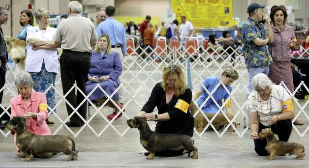A group of small dogs are prepared for show by their handlers at the River City Cluster of Dog Shows on July 14, 2007 at the Convention Center. Photo: San Antonio Express-News File Photo / SAN ANTONIO EXPRESS-NEWS