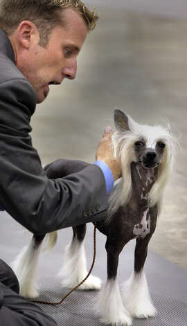 Jessie Sutton shows his Chinese Crested at the River City Cluster of Dog Shows on July 12, 2007 at the Convention Center. Photo: Bob Owen, San Antonio Express-News / SAN ANTONIO EXPRESS-NEWS