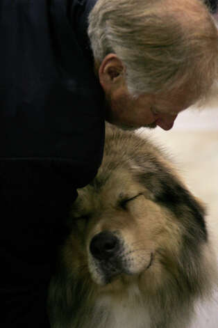 Midas, a Tibetan Mastiff, gets a pat at the River City Cluster of Dog Shows on July 13, 2008 at the Convention Center. Photo: San Antonio Express-News File Photo / © San Antonio Express-News