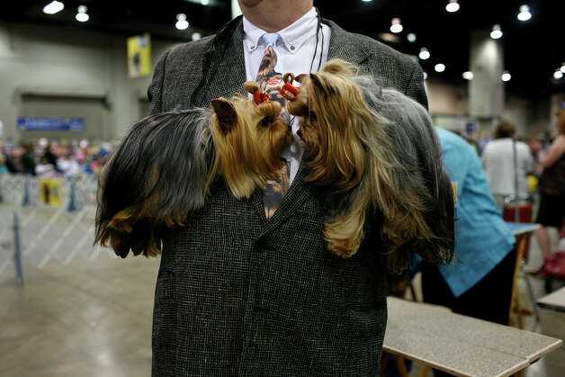 Bill Hinds of San Antonio holds Peri Ann and Natalie, his Yorkshire Terriers, before competing at the River City Cluster of Dog Shows on July 12, 2008 at the Convention Center. Photo: Lisa Krantz, San Antonio Express-News / lkrantz@express-news.net