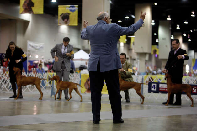 Arley Hussin judges Vizsla Best of Breed at the River City Cluster of Dog Shows on July 9, 2008 at the Convention Center. Photo: Lisa Krantz, San Antonio Express-News / lkrantz@express-news.net