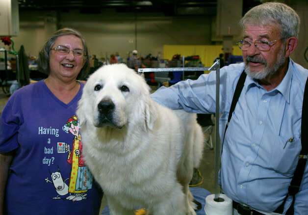 Barbara and Wayland Dillard with Fancy, a Great Pyrenees, at the River City Cluster of Dog Shows on July 11, 2009 at the Convention Center. Photo: J. Michael Short, For The Express-News / THE SAN ANTONIO EXPRESS-NEWS/210 SA