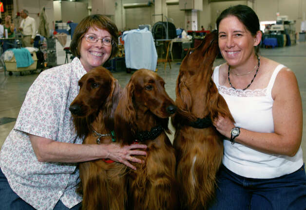 Margie Arnett and Karen Bishop with Irish Setters Bette, Jenny and Jena, at the River City Cluster of Dog Shows on July 11, 2009 at the Convention Center. Photo: J. Michael Short, For The Express-News / THE SAN ANTONIO EXPRESS-NEWS/210 SA
