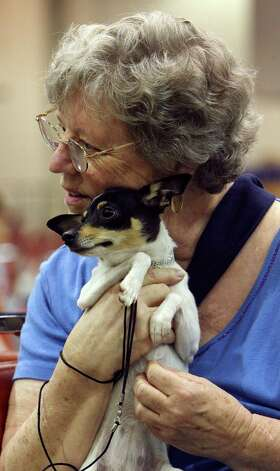 Lisetta Ennis holds her neighbor's dog Jessie Mae, a Toy Fox Terrier, at the River City Cluster of Dog Shows on July 10, 2009 at the Convention Center. Photo: Edward A. Ornelas, San Antonio Express-News / eaornelas@express-news.net