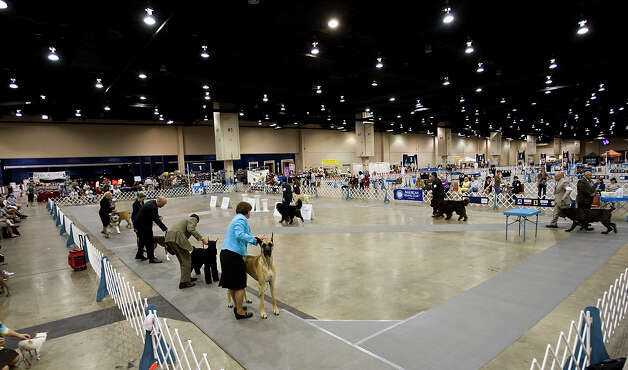 Handlers show their dogs in the ring at the River City Cluster of Dog Shows on June 17, 2010 at the Convention Center. Photo: San Antonio Express-News File Photo / iaguirre@express-news.net