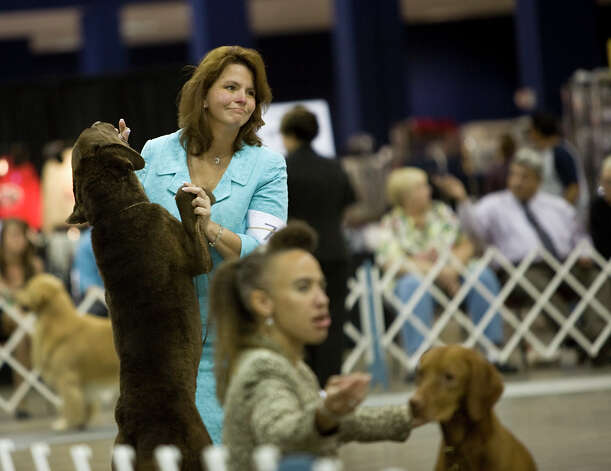 Handler Holly Eldredon waits to be judged at the River City Cluster of Dog Shows on June 17, 2010 at the Convention Center. Photo: San Antonio Express-News File Photo / iaguirre@express-news.net