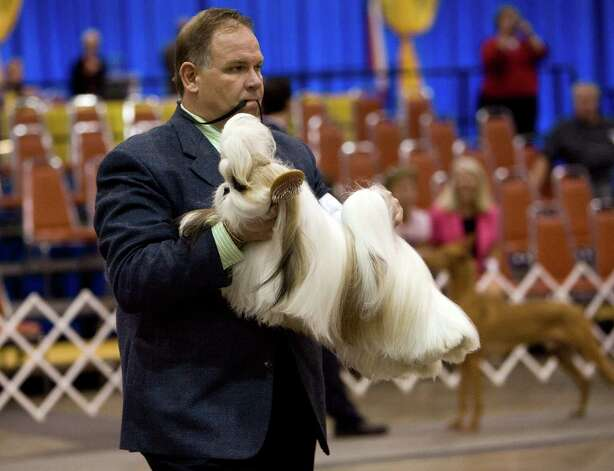 A trainer carries his dog to the judging table at the River City Cluster of Dog Shows on June 17, 2010 at the Convention Center. Photo: San Antonio Express-News File Photo / iaguirre@express-news.net