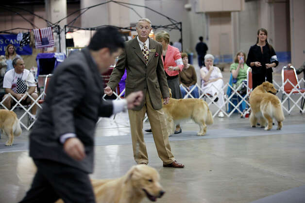 A judge looks on at the River City Cluster of Dog Shows on June 17, 2010 at the Convention Center. Photo: San Antonio Express-News File Photo / iaguirre@express-news.net