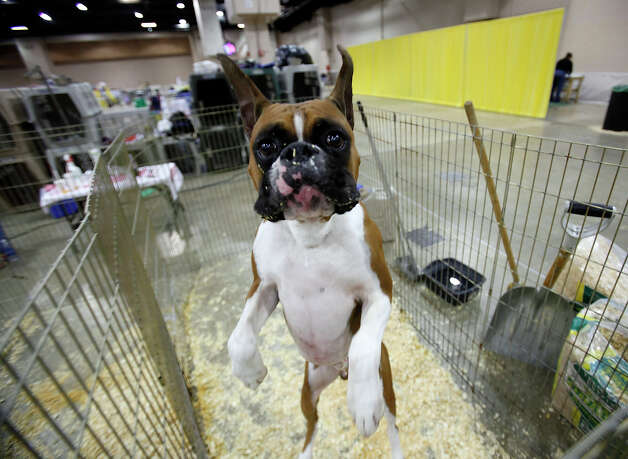 Get excited! The River City Cluster of Dog Shows is back at Freeman Expo Hall, starting today through Sunday. Here's a look back at past shows: