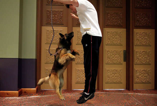 Jeff Curran and Clipper, a Belgian Tervuren, leap into the air in anticipation of competiting in the dog agility event at the River City Cluster of Dog Shows on June 18, 2010 at the Convention Center. Photo: Kin Man Hui, San Antonio Express-News / San Antonio Express-News