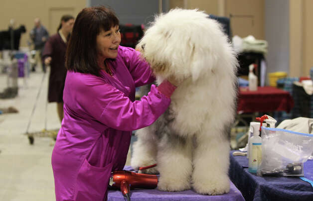 Cindy Reidinger talks to Cuatro, the old English Sheepdog, at the River City Cluster of Dog Shows and Alamo City Pet Expo on March 13, 2011 at the Freeman Expo Hall. Reidinger said she's Sheepdogs since 1974. Photo: John Davenport, San Antonio Express-News