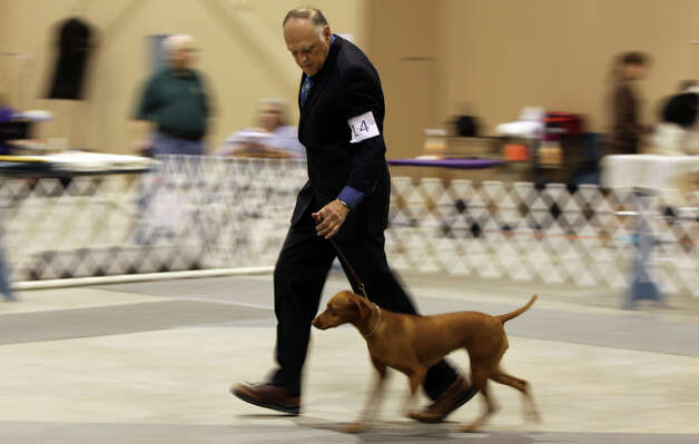 Tom Maurer of San Angelo walks with a Vizsla at the River City Cluster of Dog Shows and Alamo City Pet Expo on March 13, 2011 at the Freeman Expo Hall. Photo: John Davenport, San Antonio Express-News / jdavenport@express-news.net