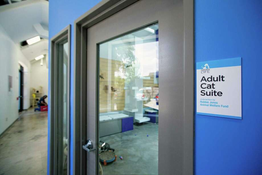 The view of the Adult Cat Suite is seen at Friends for Life's new Don Sanders pet adoption center in the Heights neighborhood of Houston. Photo: TODD SPOTH, For The Chronicle / Todd Spoth