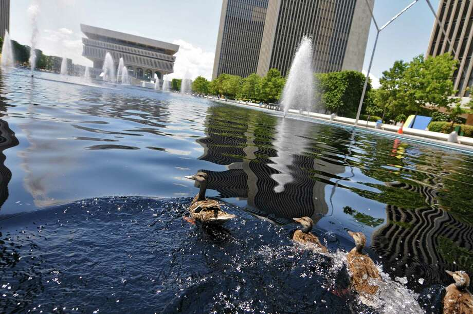 Ducks move out of their shady perch at the approach of a camera, in the fountains of the Empire State Plaza near the Egg on Wednesday  July 11, 2012 in Albany, NY. (Philip Kamrass / Times Union) Photo: Philip Kamrass