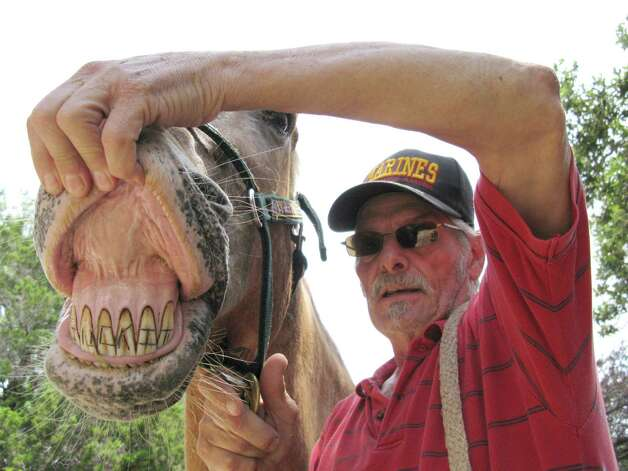 "The words ""suck it"" were carved into the front teeth of ""Cowboy"" the horse in 2009, allegedly by a San Angelo man, before the animal was obtained by current owner Jay Sorrell (right). Photo: Zeke MacCormack, San Antonio Express-News / San Antonio Express-News"