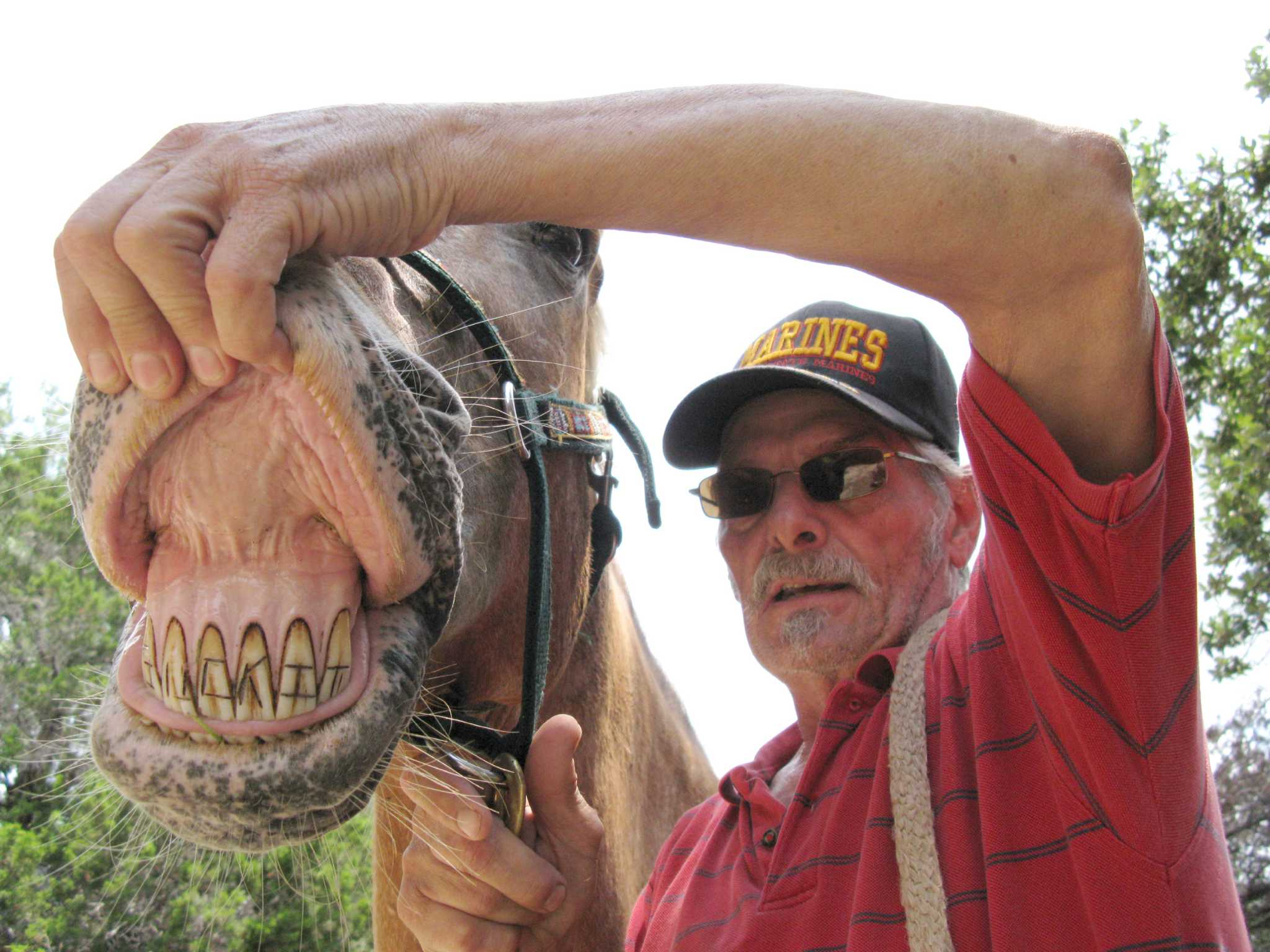 Смотреть онлайн бесплатно suck of the horse 5 фотография