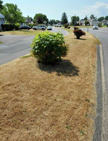 Grass on the traffic median on Sunrise Blvd. in Rotterdam shows the effects a recent hot, dry weather Thursday July 12, 2012.  (John Carl D'Annibale / Times Union) Photo: John Carl D'Annibale / 00018431A
