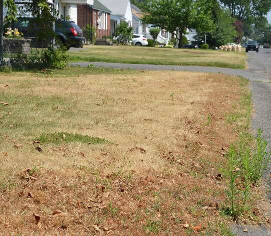 Lawns along Trinity Avenue in Rotterdam show the effects a recent hot, dry weather Thursday July 12, 2012.  (John Carl D'Annibale / Times Union) Photo: John Carl D'Annibale / 00018431A
