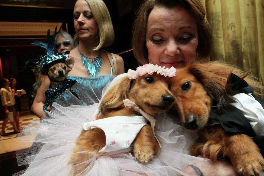 "Dachshunds dressed for the occasion, Dee Dee, foreground left, and her cousin Clifford, foreground right, are held by their owner Valerie Diker, as they and other dogs and people wait for the start of the most expensive wedding for pets Thursday July 12, 2012 in New York.  The black tie fundraiser, where two dogs were ""married"", was held to benefit the Humane Society of New York. Dee Dee and Clifford were part of the wedding party. Photo: Tina Fineberg, AP / FR73987 AP"