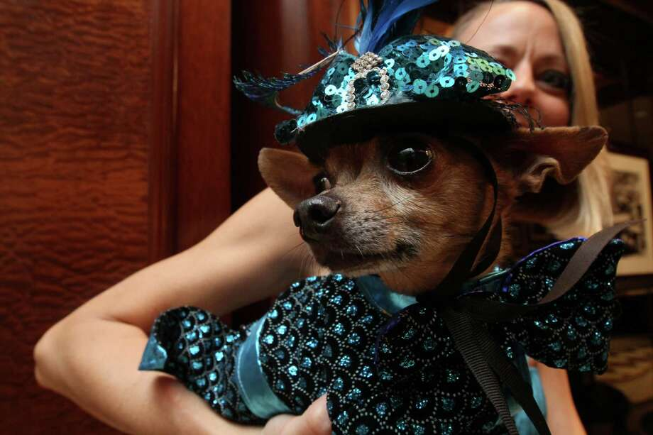 "Dressed for the occasion, Eli, a Chihuahua, is held by his owner Karen Biehl of New York, as they wait for the start of the most expensive wedding for pets Thursday July 12, 2012 in New York.  The black-tie fundraiser , where two dogs were ""married"", was held to benefit the Humane Society of New York. Photo: Tina Fineberg, AP / FR73987 AP"