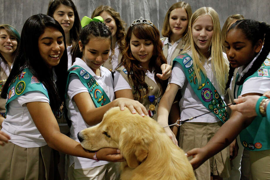 "Girl Scouts with Girl Scouts of Southwest Texas pet ""Grand Champion Bravo Rycroft's A Wrink L N Thyme, a golden retriever also known as ""Chase"" as they visit the River City Cluster of Dog Shows at the Exposition Hall on the grounds of Freeman Coliseum in San Antonio on Friday, July 13, 2012. Chase is owned by Carol Abernathy of Sweetwater. Photo: Lisa Krantz, San Antonio Express-News / San Antonio Express-News"