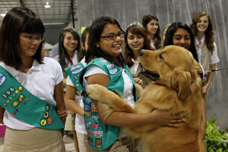 "Claudia Contreras, 11, of Eagle Pass, center, holds onto Rycroft's Saracen Full Throttle, also known as ""Rev"" and co-owned by Carol Abernathy, after he jumped in her arms to the amusement of other Girl Scouts with Girl Scouts of Southwest Texas as they visit the River City Cluster of Dog Shows at the Exposition Hall on the grounds of Freeman Coliseum in San Antonio on Friday, July 13, 2012. Photo: Lisa Krantz, San Antonio Express-News / San Antonio Express-News"