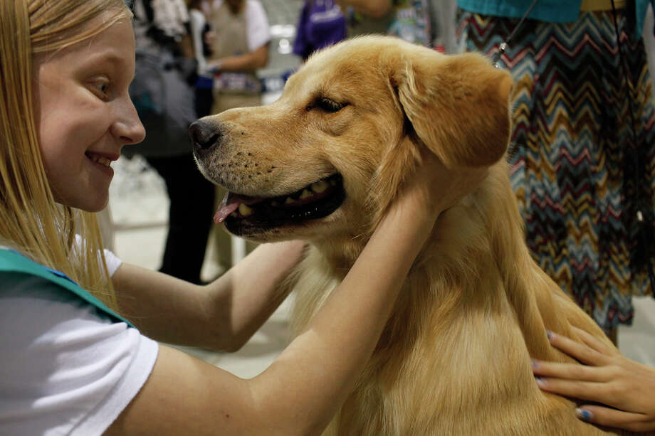 "Girl Scout Alana Pickens, 12, embraces ""Grand Champion Bravo Rycroft's A Wrink L N Thyme,"" a golden retriever also known as ""Chase"" and owned by Carol Abernathy, as she visits the River City Cluster of Dog Shows with a group of Girl Scouts with Girl Scouts of Southwest Texas at the Exposition Hall on the grounds of Freeman Coliseum in San Antonio on Friday, July 13, 2012. Photo: Lisa Krantz, San Antonio Express-News / San Antonio Express-News"